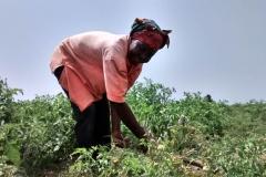 media_tour_of_selected_farms_in_koluedor_near_ada_11_20180214_1505671032