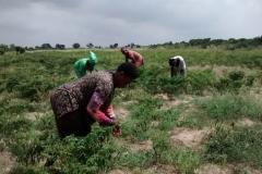 media_tour_of_selected_farms_in_koluedor_near_ada_13_20180214_1746536390
