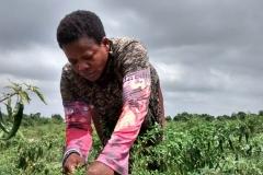 media_tour_of_selected_farms_in_koluedor_near_ada_14_20180214_1896704823