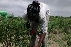 media_tour_of_selected_farms_in_koluedor_near_ada_16_20180214_1603823012