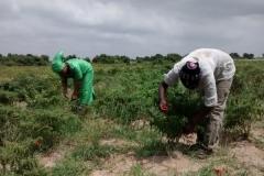 media_tour_of_selected_farms_in_koluedor_near_ada_17_20180214_1760357539