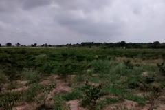 media_tour_of_selected_farms_in_koluedor_near_ada_5_20180214_1913780201